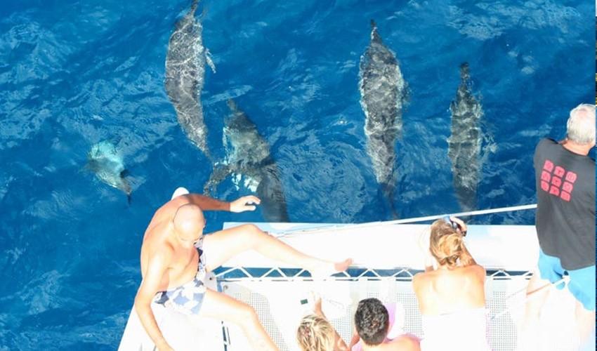 Catamaran See Dolphins | Atom Leisure boat
